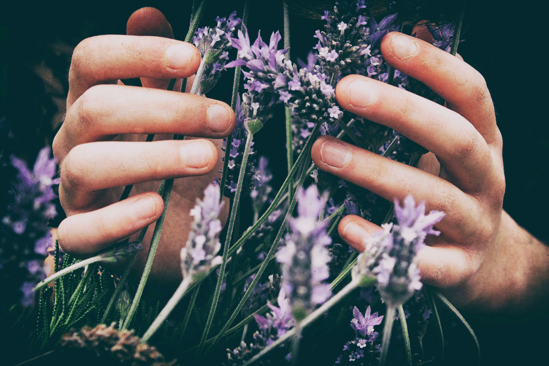 hands in lavendar